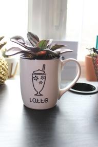 Succulent plant in a mug